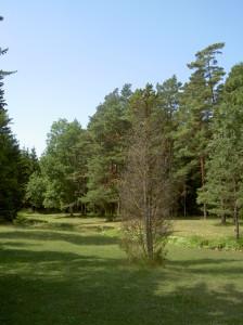 Tjaukle Gotland Netclassics copyright